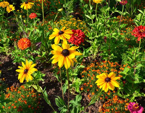 Blumen im Hochbeet
